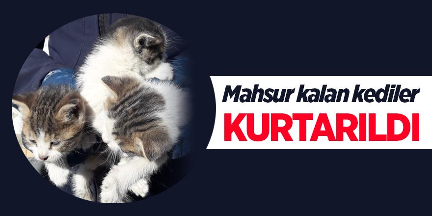Mahsur kalan yavru kediler kurtarıldı