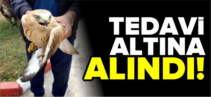 YARALI DOĞAN TEDAVİ ALTINA ALINDI