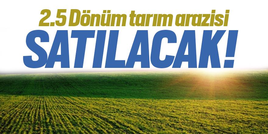 2.5 dönüm tarım arazisi satılacak!