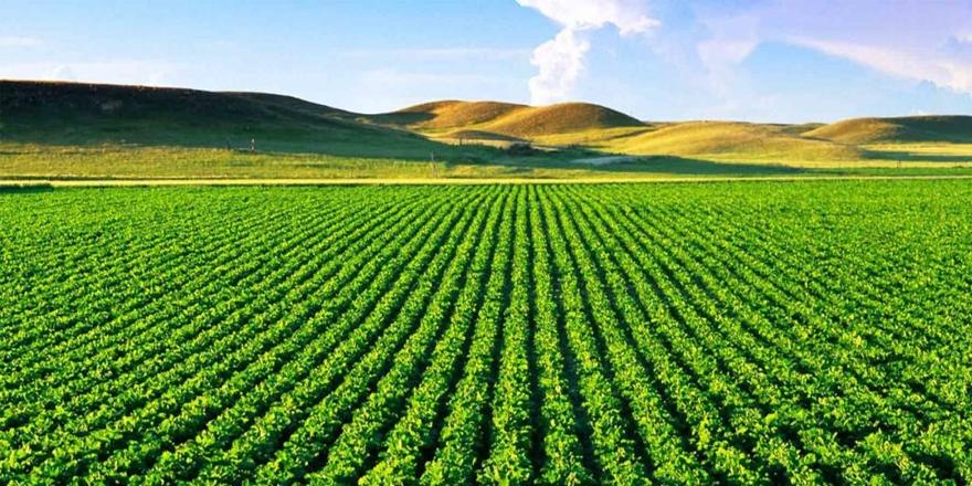 6 dönüm tarım arazisi satılacak