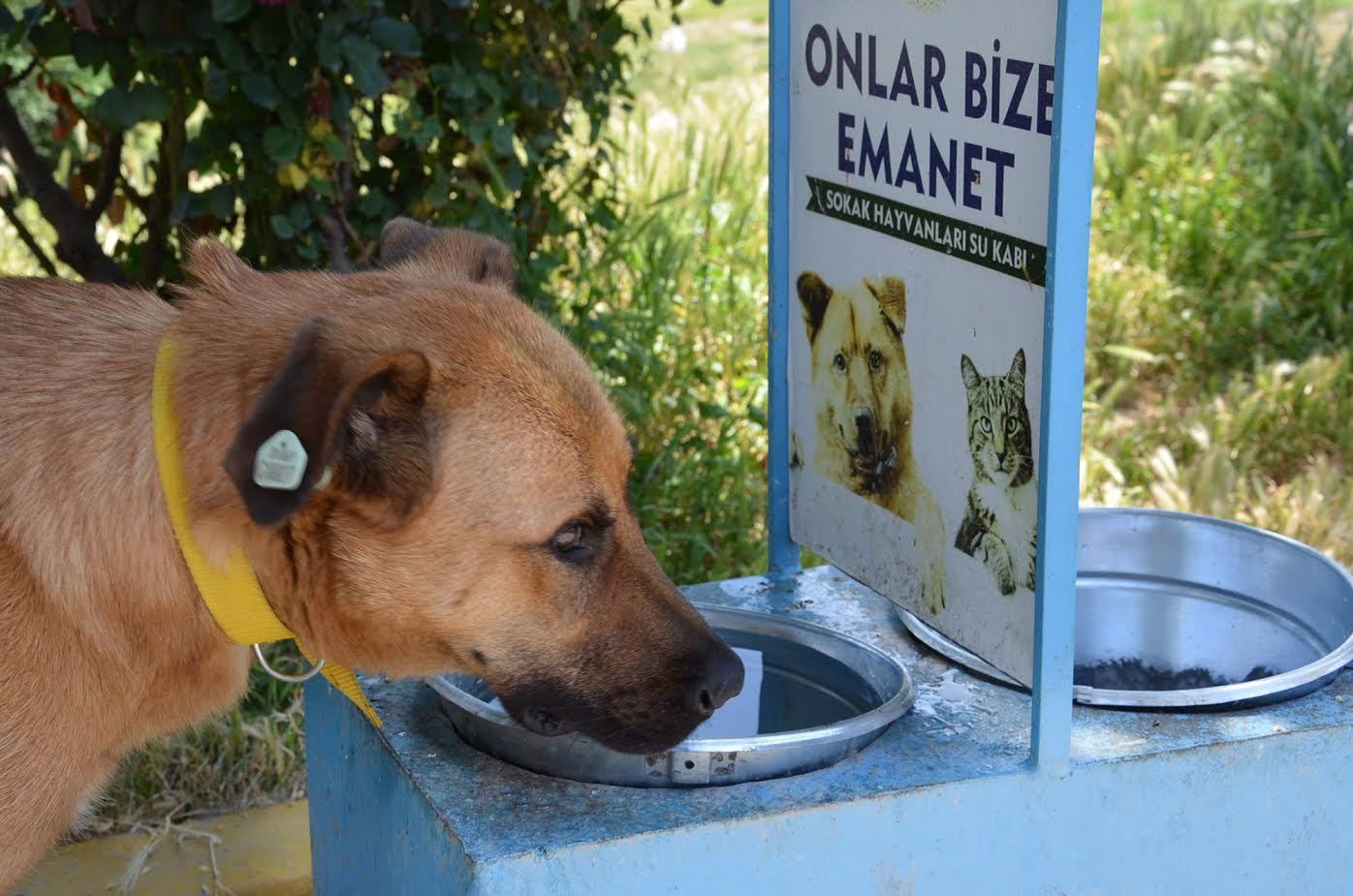 bozuyuk-belediyesi'nden-sokak-hayvanlarina-su-ve-mama.jpg